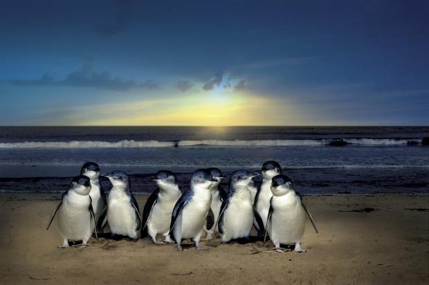 Philip Island